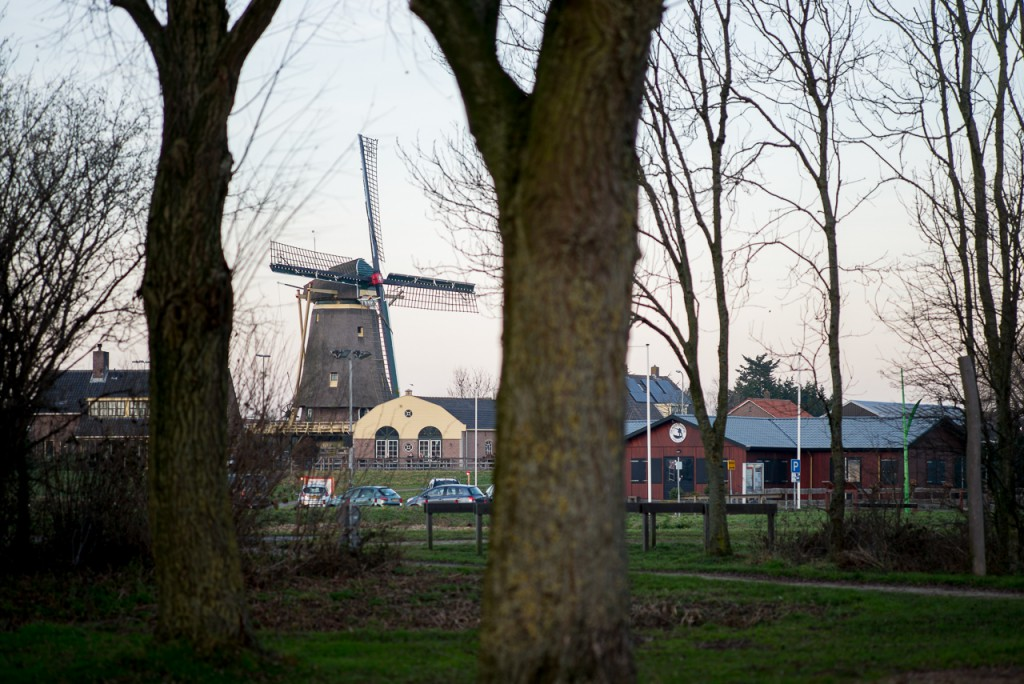 A typical dutch landscape.