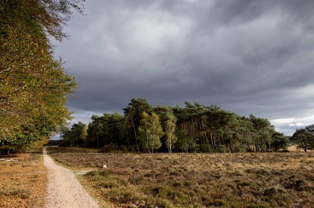 So this is how the Veluwe looks like.