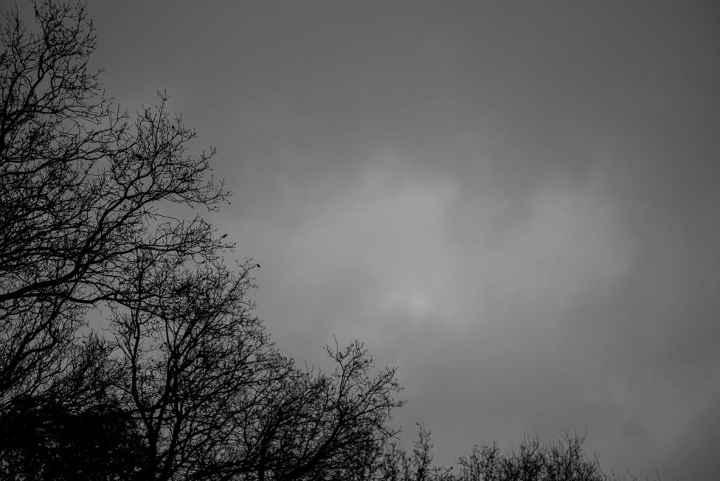 Leica Summarit-M 75/2.4 review