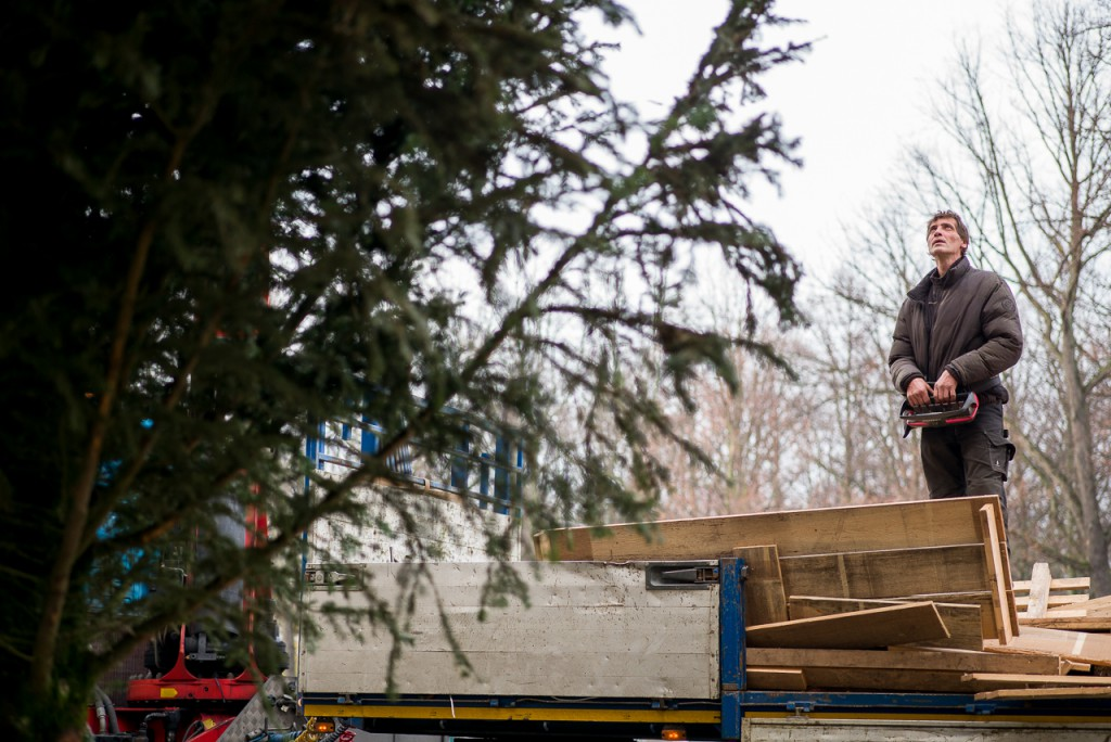 Setting up a big, big Christmas tree. A 75mm gives a little extra reach over a 50mm.